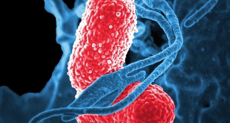 Probióticos y simbióticos