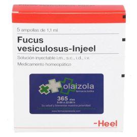 Fucus vesiculosus-Injeel 5 ampollas 1,1 ml