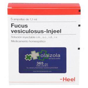 Fucus vesiculosus-Injeel 100 ampollas 1,1 ml