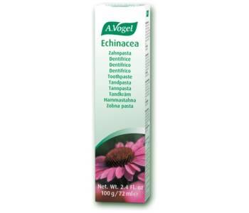 Dentaforce Echinacea