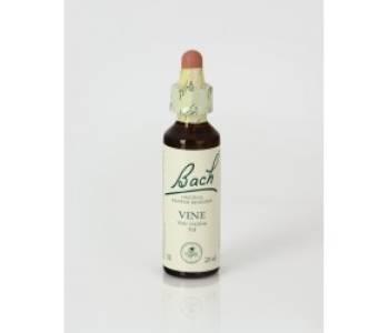 Vine (Vid)