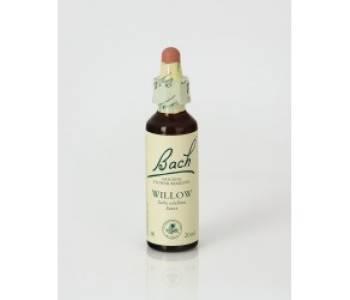 Willow (Sauce)